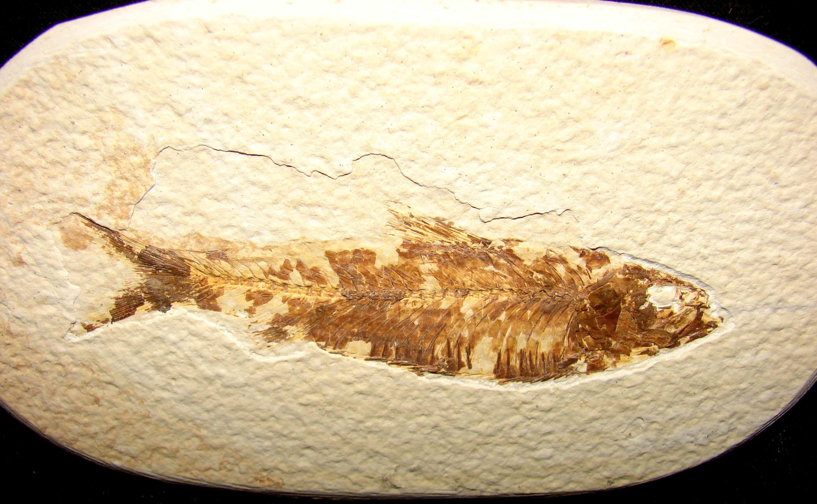 http://www.artfromgod.com/fossilfish-30.jpg (807370 bytes)